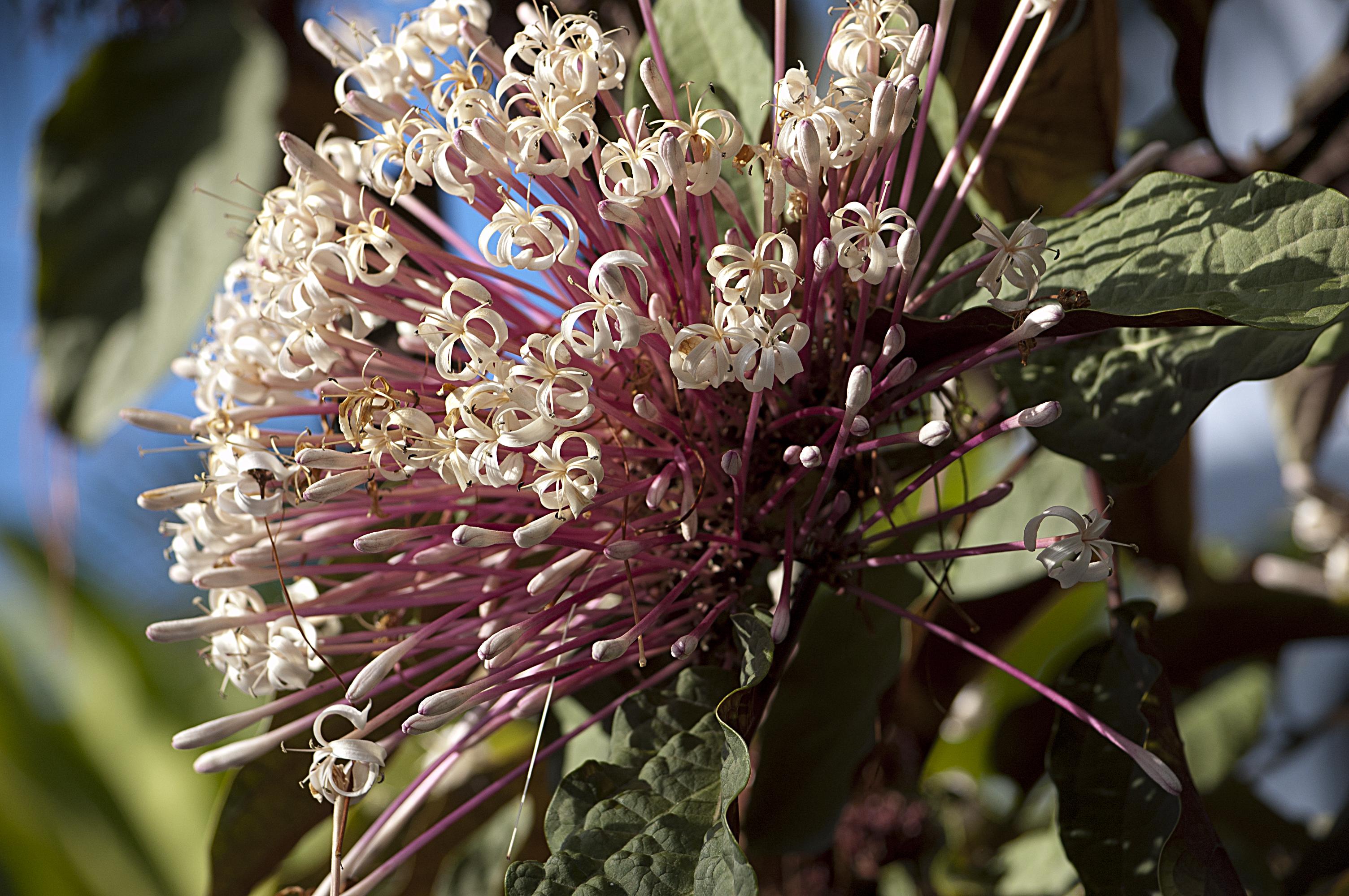 Exotic Flora I
