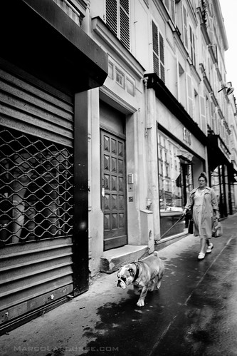 Bulldog roaming the city - Fuji X-Pro 1