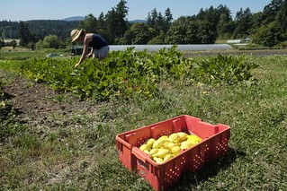Events underway as BC celebrates Organic Week
