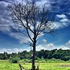 #schaax #single #trees #mawanella #photooftheday #bestoftheday #lka #picoftheday #clouds #bluesky #nature #beautiful #pretty #skylovers #followme #followback #followforfollow #f4f #flowerporn #maldives #turkey #turkish #germany #singapore #malaysia #spain
