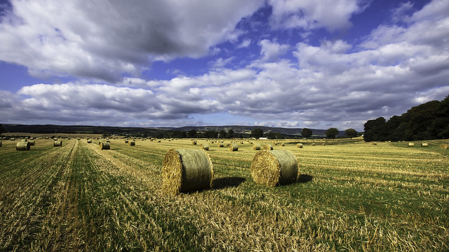 Hay Comes Autumn