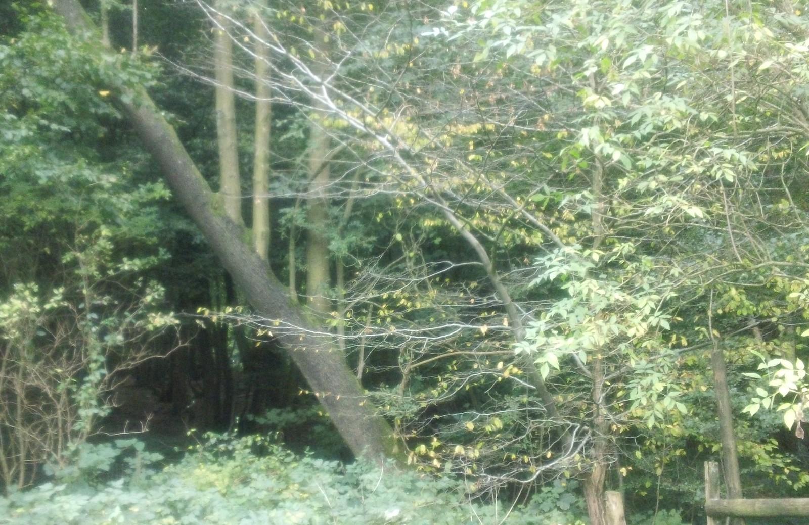 Odd-wood Kent