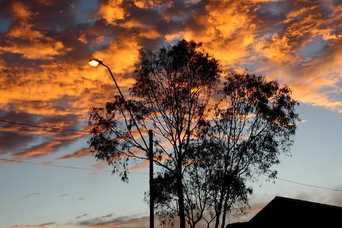 IMG 4568 Gum Tree Dawn