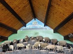 Rotorua.  Display of sheep and names of breeds at the Agradome display near Rotorua.