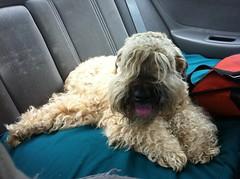 BEAR CAM: Ella on the road