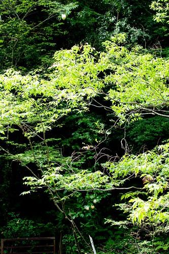 モリアオガエルの森