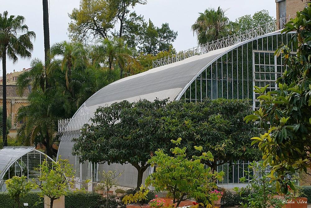 Jardin Botánico de Valencia (16)