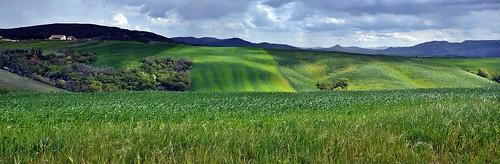 green field landscape tuscany
