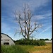 quonset hut and tree by brown_theo