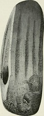 "Image from page 201 of ""The ancient stone implements, weapons, and ornaments, of Great Britain"" (1872)"
