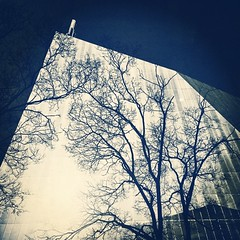 Foreground Flora. #abstract #architecture #silhouette