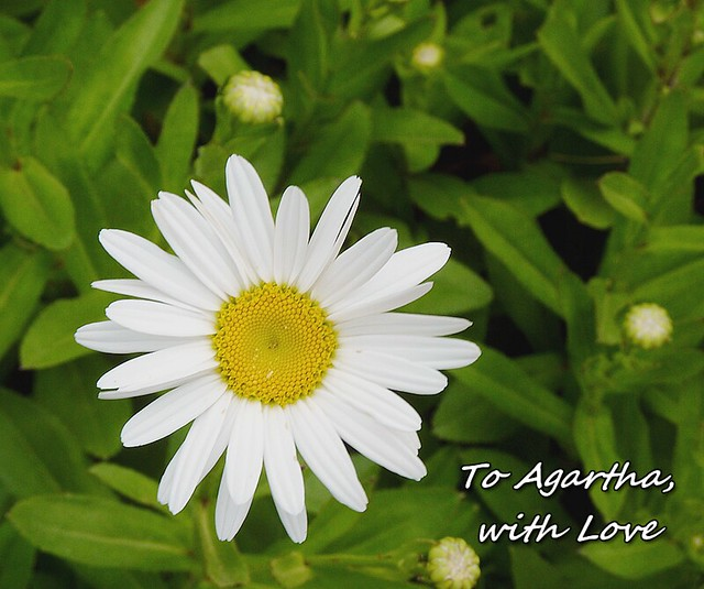Header of Agartha