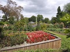 Botanical Gardens Singleton Park  Swansea 15th July 2014 (131)