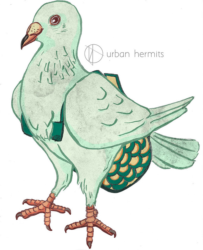 Portrait of Franco, the homing pigeon