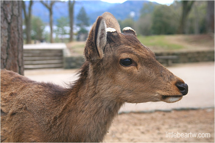 奈良公園-34
