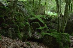 Rochers au cœur de la forêt
