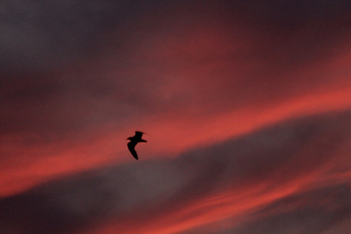 sunset bird birds silhouette dusk seagull gull north shore jersey wildwood