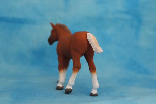 Walkaround of the 2014 Mojo Fun Suffolk Punch Foal 14878017157_7872b3882a