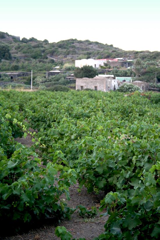 Pantelleria_71