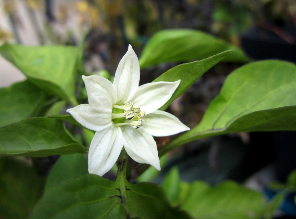 quelques fleurs jardin secret