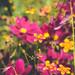 vintage garden #3