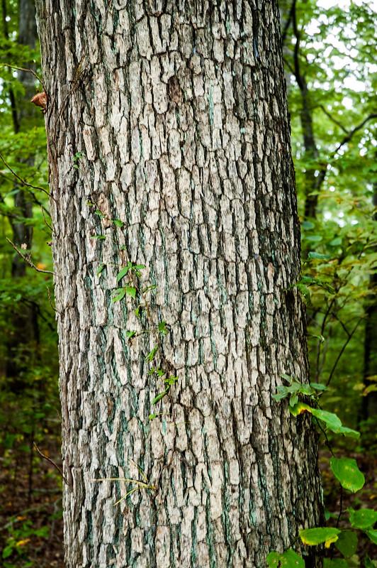 White Oak Nature Preserve