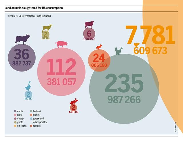 Infografik zur Anzahl der für den Fleischkonsum geschlachteten Tiere in den USA   Mehr Informationen zum Thema finden Sie in unserem Fleischatlas www.boell.de/de/fleischatlas
