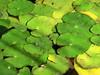 molto verde sull'acqua