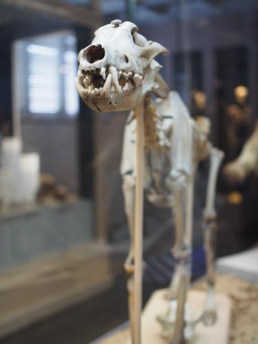 リール自然史博物館