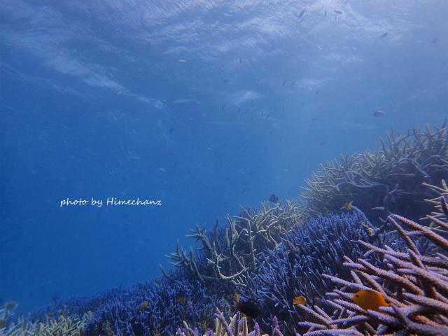 極上サンゴ♪