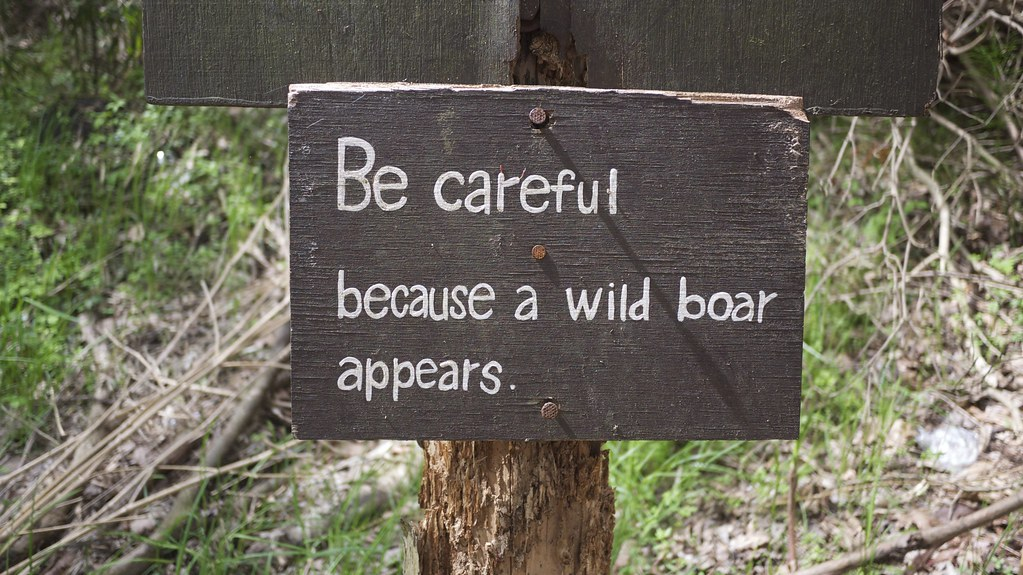 Be careful because a wile boar appears