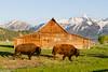 Bison and Moulton Barn 1690