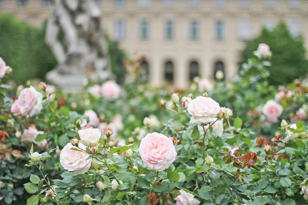 Palais Royal roses-12.jpg