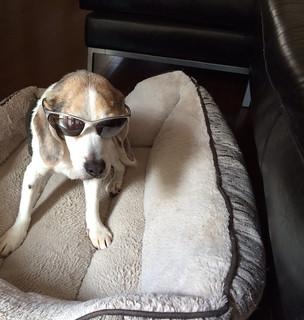 Spenser celebrates National Sunglasses Day