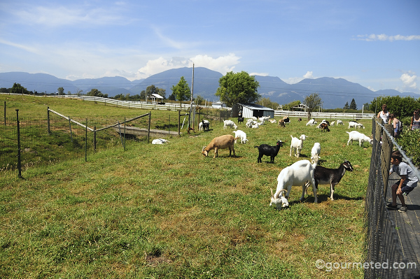 Fraser Valley Slow Food Cycle Tour