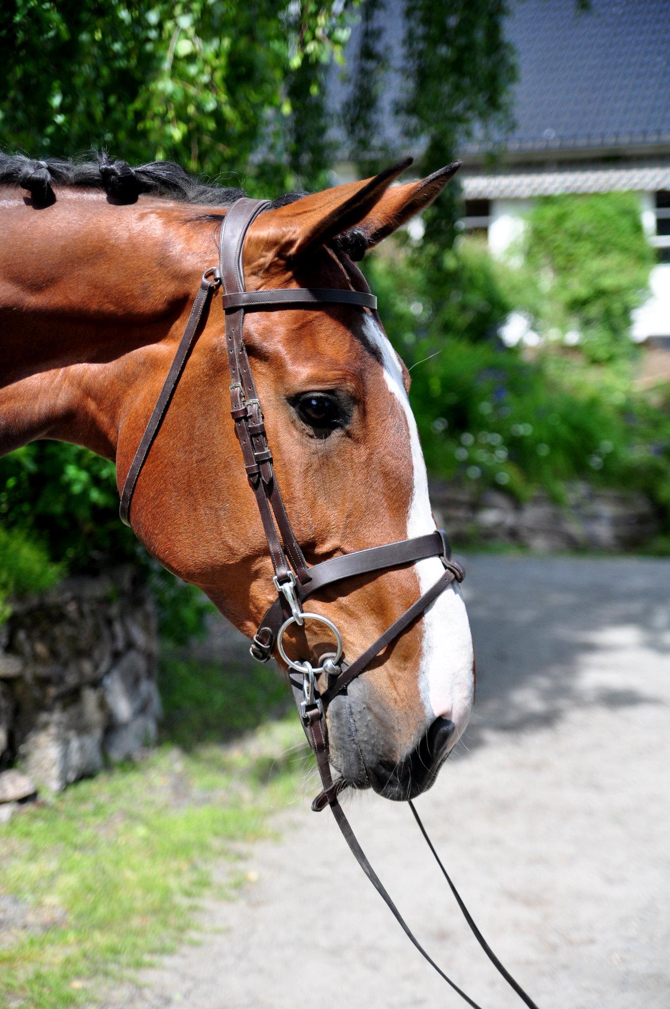 Bilde av hesten
