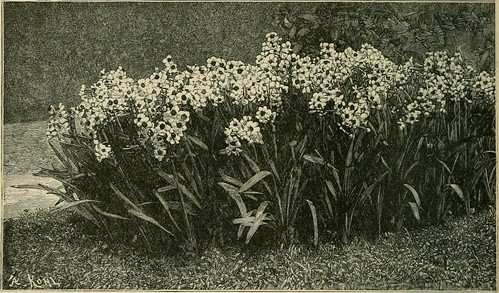 Image from page 122 of