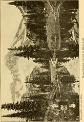 """Image from page 158 of """"The top of the continent; the story of a cheerful journey through our national parks"""" (1917)"""