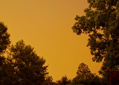 189/365: Crazy sky like orange sherbert