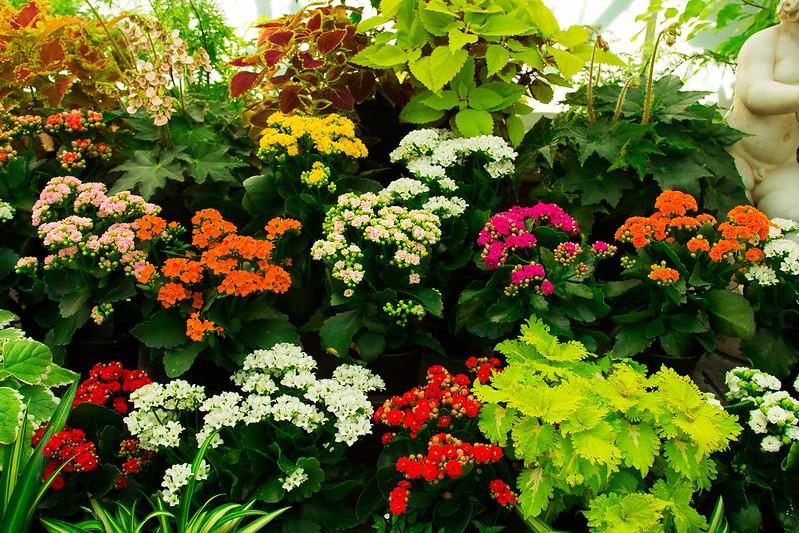 Botanical Conservatory_04