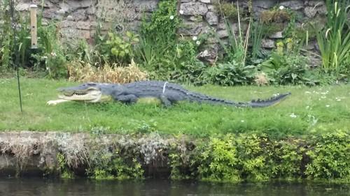Beware of alligators #LondonLOOP #sh