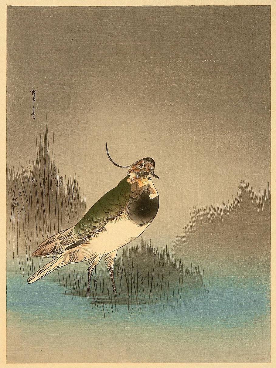 Shotei1