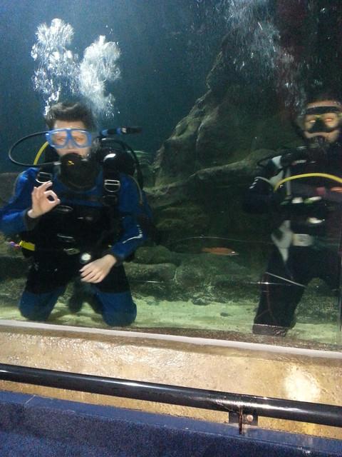 Diving 02