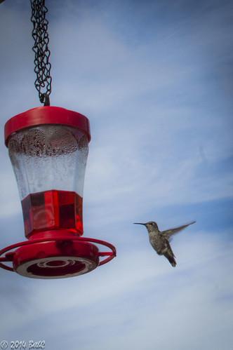 199-365 Hungry Bird