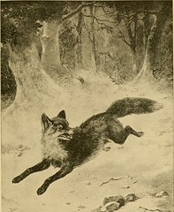 "Image from page 590 of ""The big game of North America. Its habits, habitats, haunts, and characteristics; how, when, and where to hunt it .."" (1890)"
