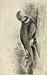"Image from page 139 of ""Wild Spain ... records of sport with rifle, rod, and gun, natural history and exploration"" (1893)"