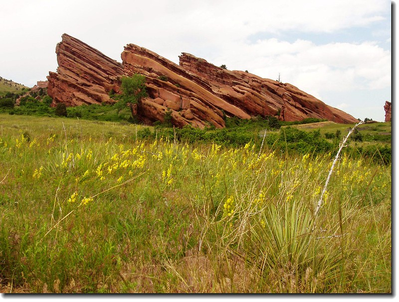 Red rock & wildfflower  in the park