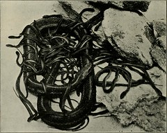 "Image from page 91 of ""Western field"" (1902)"