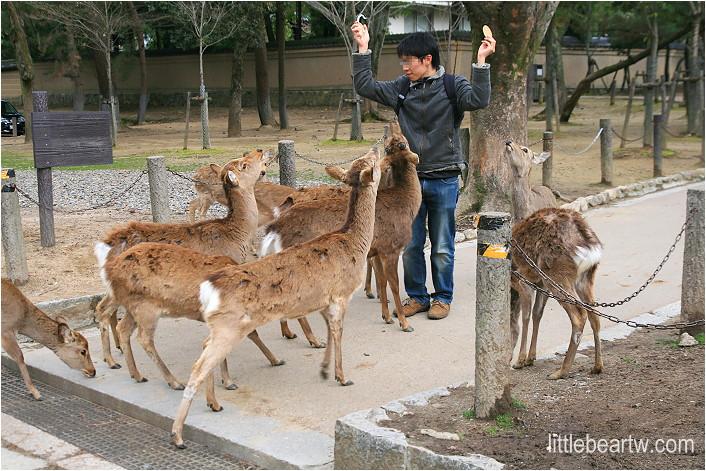 奈良公園-40