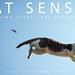 Cat Senses: Tokushima Stray Cats Photography [Kindle版] by Takashi Toyosaki